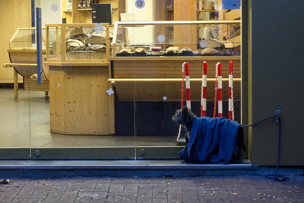 161201-marc-wiese-IMG-3088-Hannover-Street-Tiere.jpg